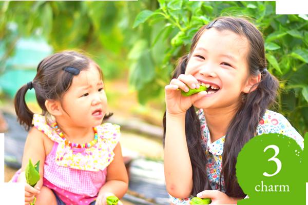 農業体験と食育